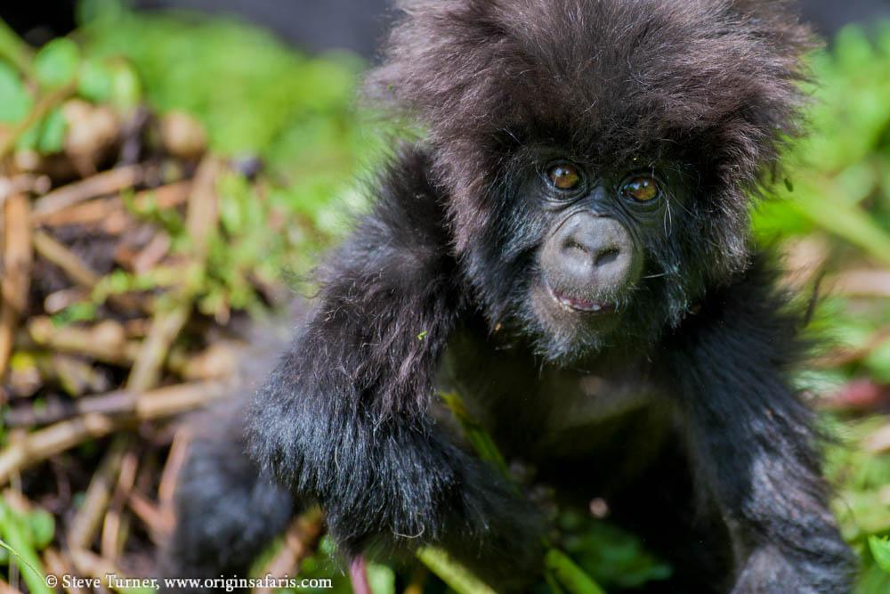 GorillaMountain-8988.jpg